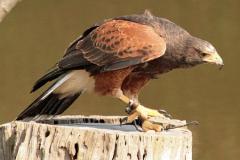 vogel_op_boomstam-1