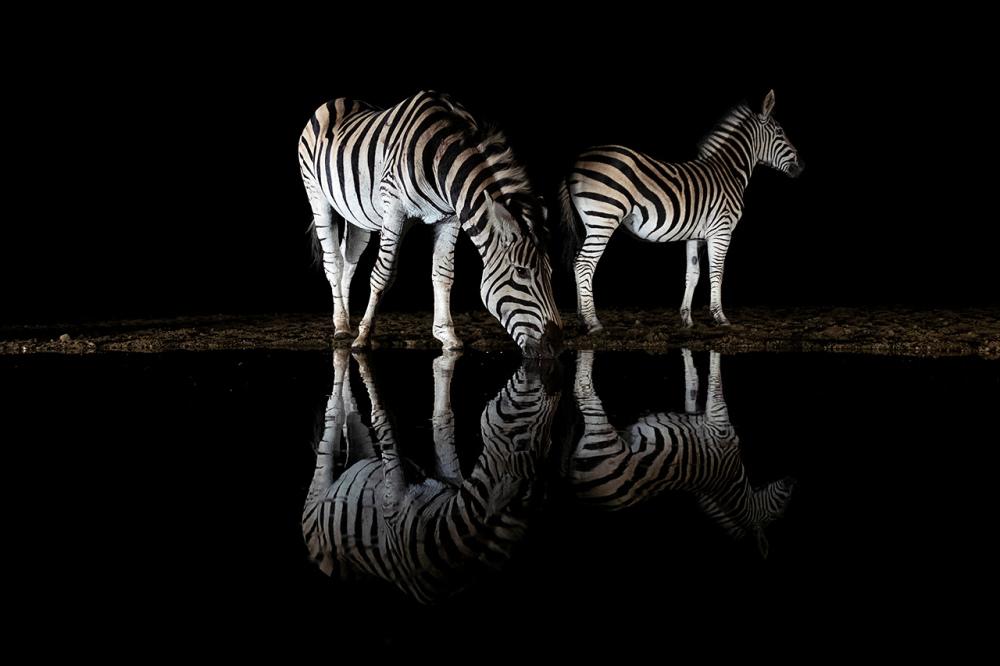 11-MarianneS-Zebra