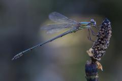 16-2018-WKuipertrofee-insecten-EdwinF-06696 (1)